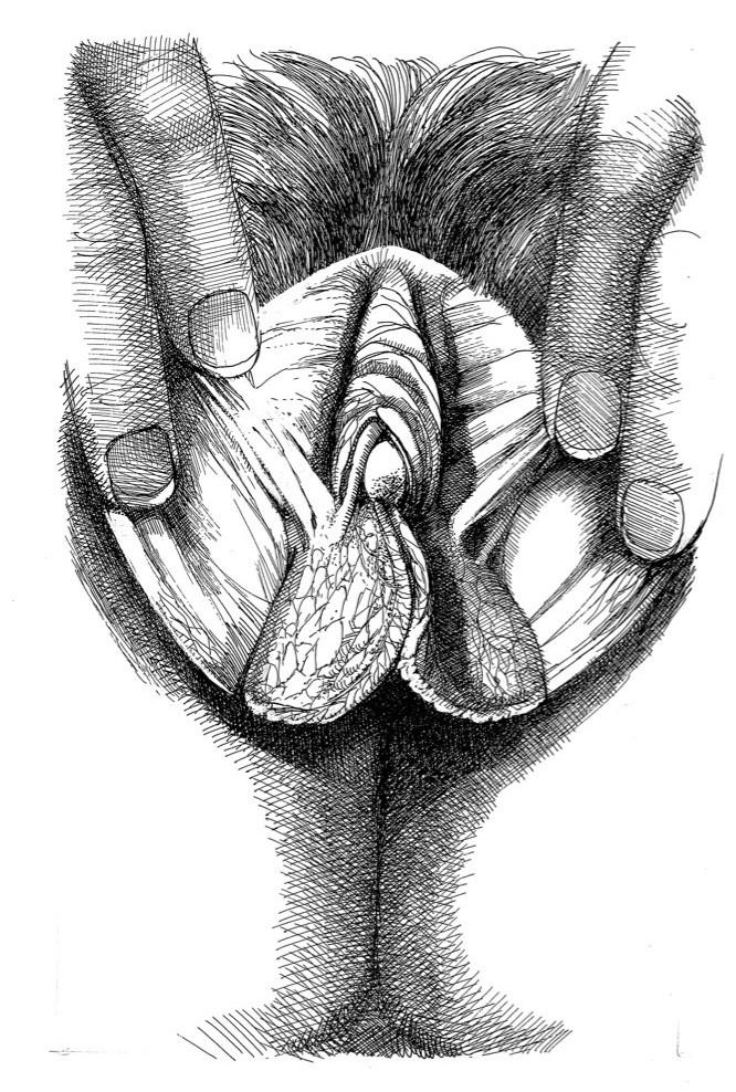 close up female genitalia