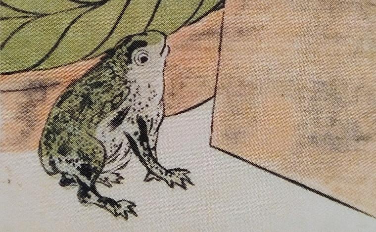 close up toad