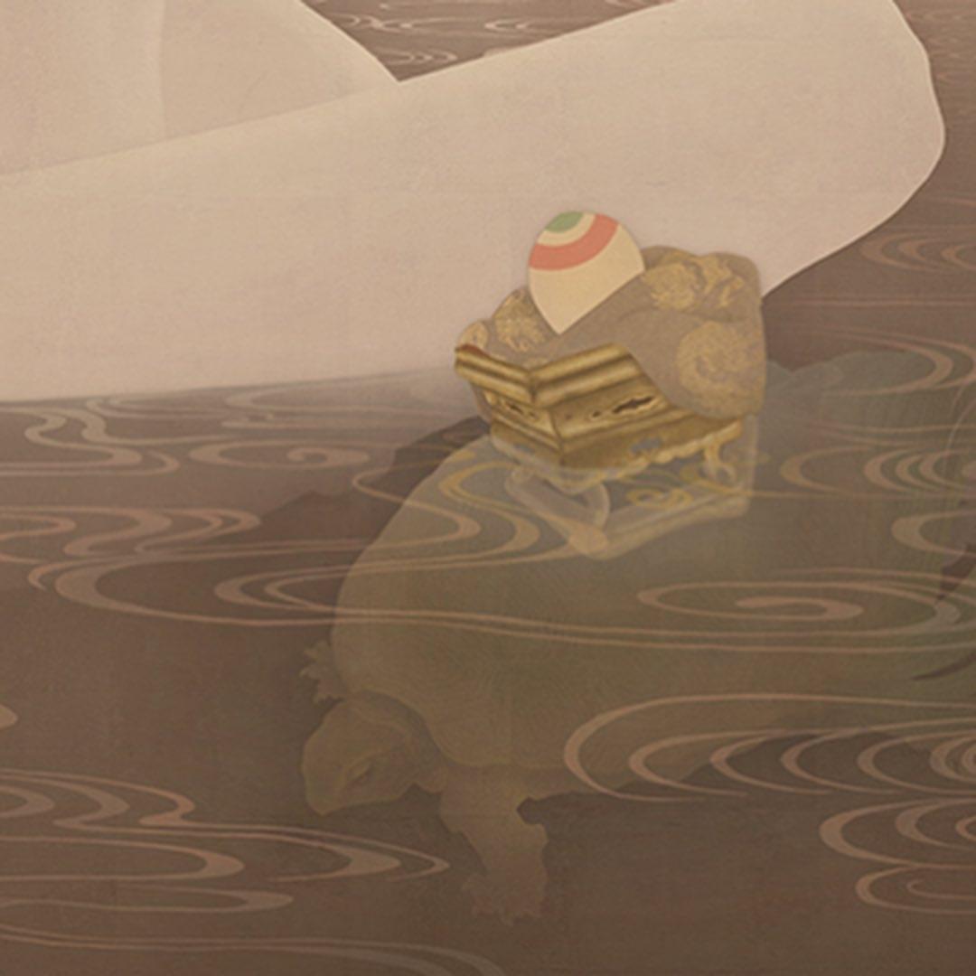 close up tortoise