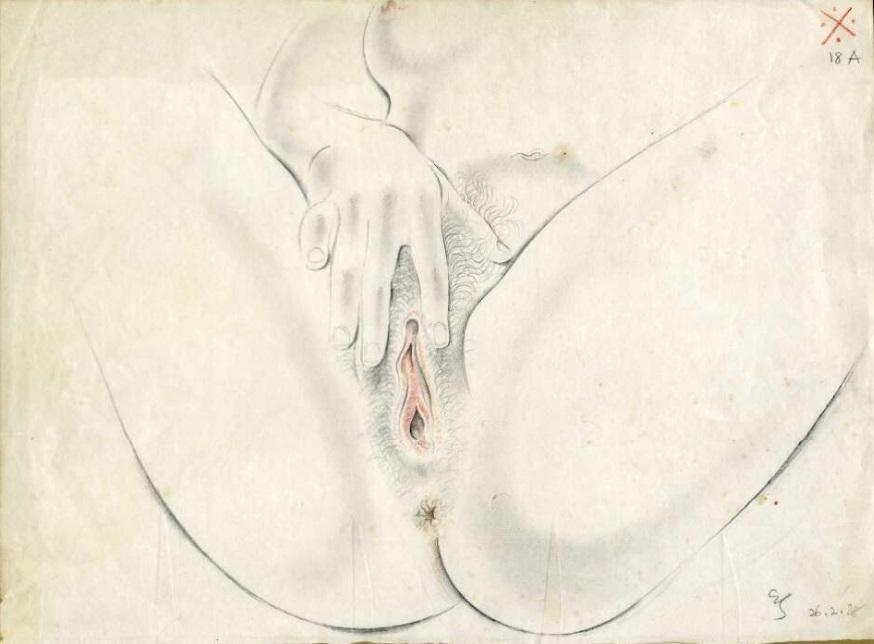 Drawing of female genitalia