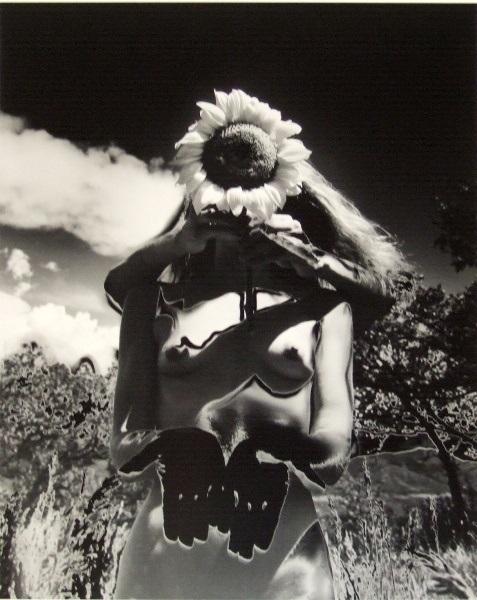 Eikoh Hosoe sunflower