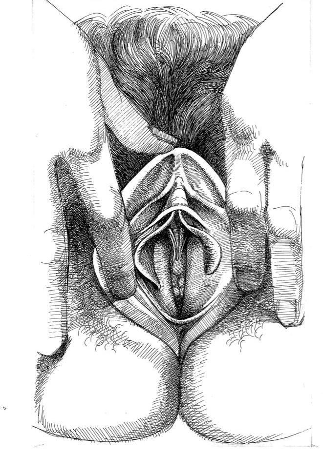 anatomical close up of vulva