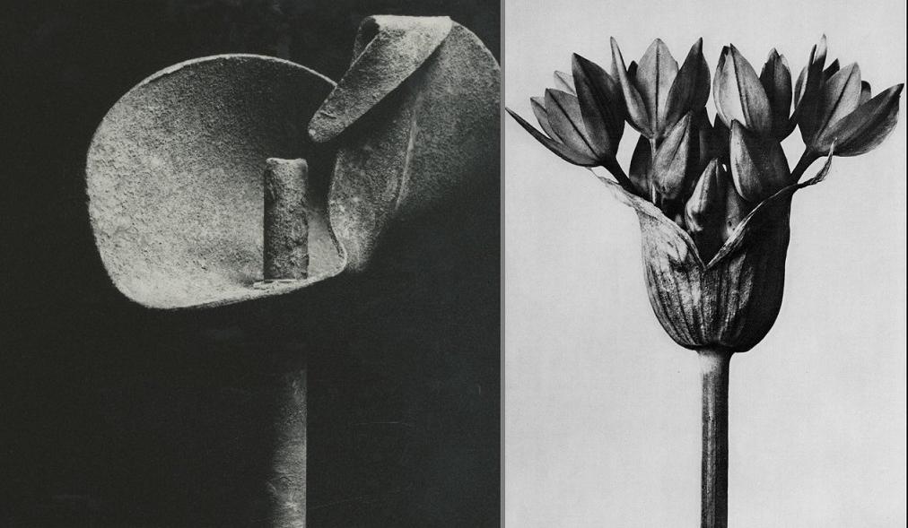 Ladislav Postupa the flower
