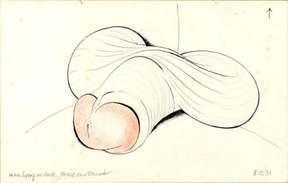 Penis lying on the stomach by Eric Gill