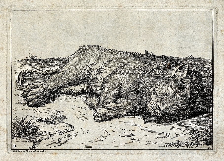 picart A Sleeping Lion