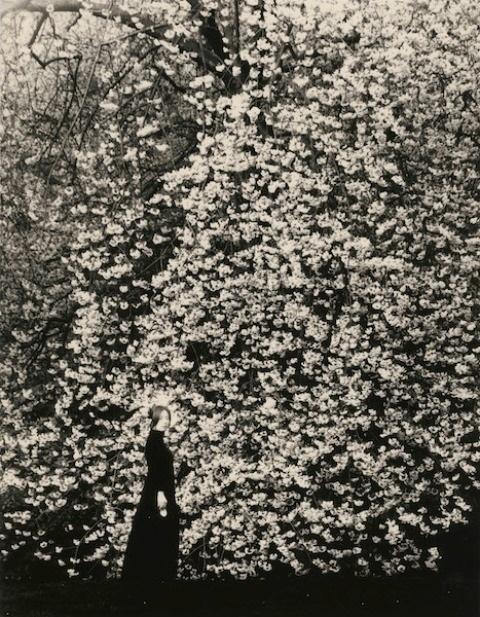 tree Masao Yamamoto