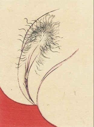 'Vagina close up' (Meiji era) by an unknown Meiji artist