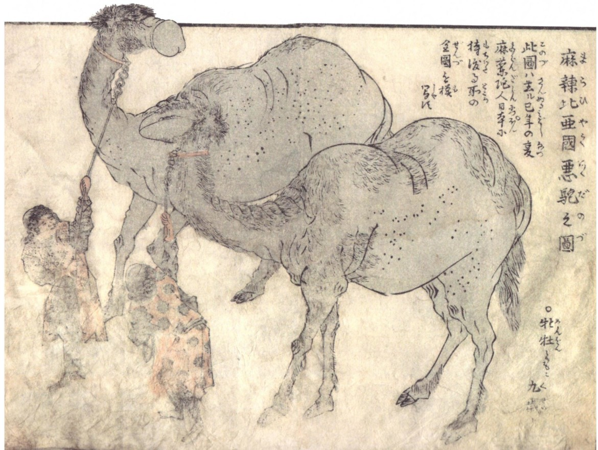 Akatsuki no Kanenari : Two dromedaries with a phallus and vulva-shaped heads