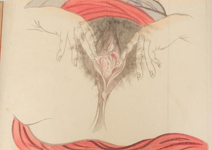 vagina close up: painting Taisho era shunga