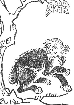Arborophilia: 'Penghou'. An illustration from Wakan Sansai Zue