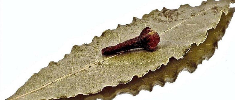 Combate dores na coluna e articulações: Chá de louro com cravo-da-índia