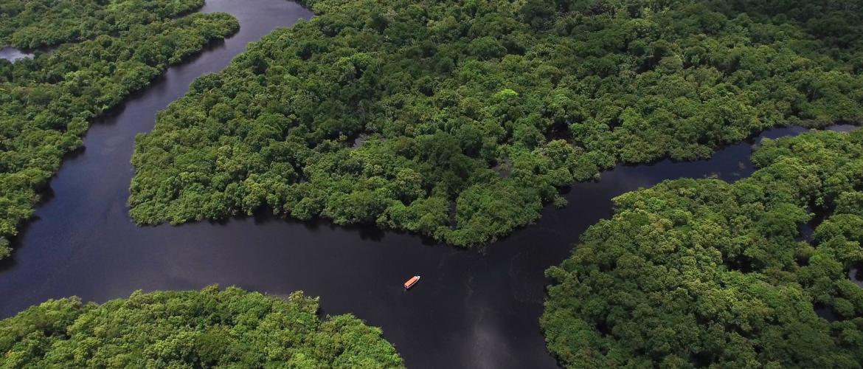 BNP Paribas zet bedrijven onder druk om ontbossing in de Amazone tegen te gaan