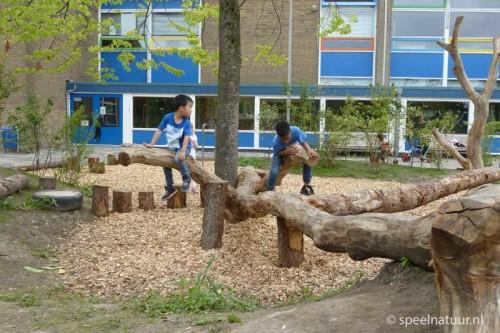 klimboom voor een groen schoolplein