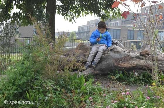 zitten op een boomstam