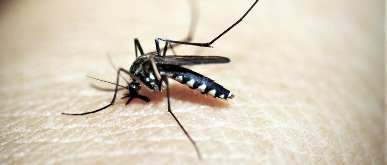 Muggenbulten: zwelling na muggenbeet