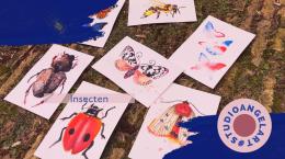 Online Aquarel workshop insecten