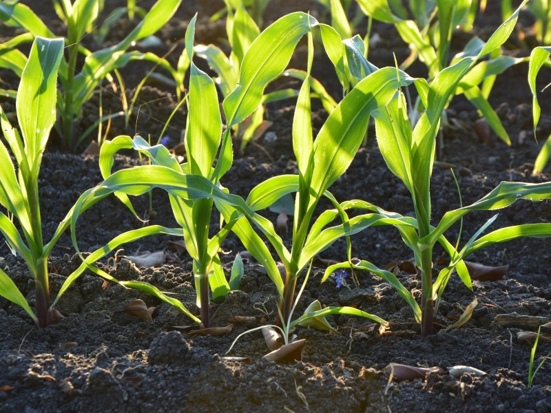 Sensors and instrumentation for plant research | SWAP instruments