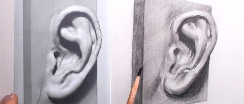 Hoe teken je oren?
