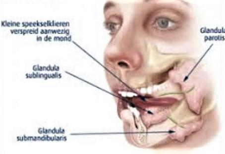 Anatomie van de mond
