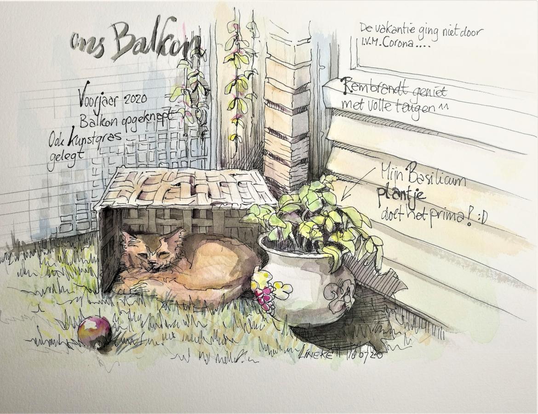 Onze kat Rembrandtje in zijn zonnemandje ^^