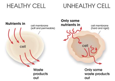 Stugge cel, gezonde cel