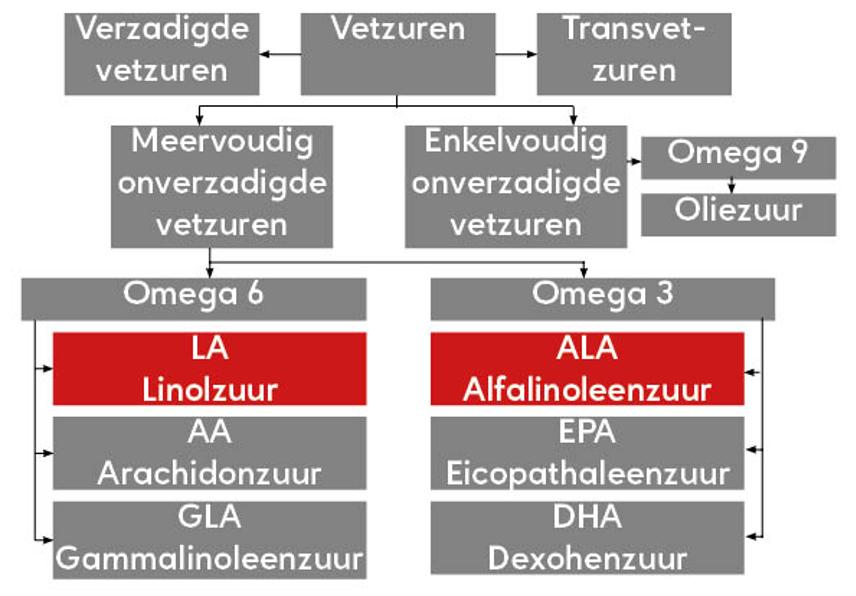 verschillende vetzuren
