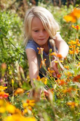 Zomerbloemenpluktuin is een kinderparadijs