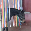 Angst  stressreductie paarden