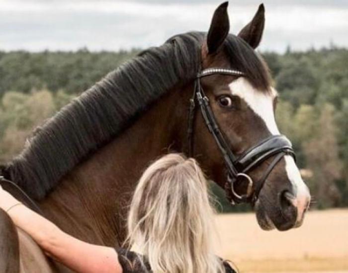Hulp bij mijn paard - paardentrainer