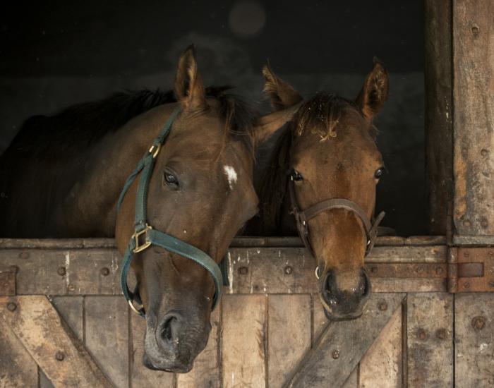 Hulp bij paard bij fokkerijen en handelsstallen