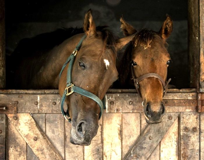 Hulp voor paard bij fokkerijen en maneges