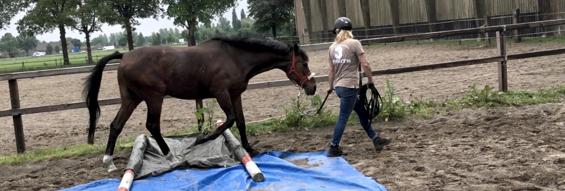 Paard over zeil
