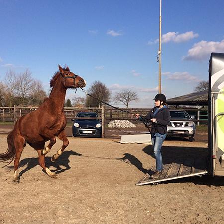 Uitdaging bij het trailer laden van je paard