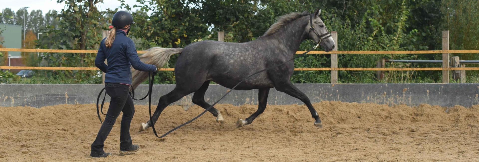 Africhting van het jonge paard