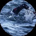 Borstcrawl techniek | Triathloncoach.nl