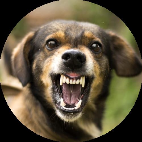 wat-moet-ik-doen-met-uitvallende-hond