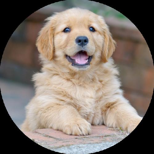 puppy belonen voor buiten plassen