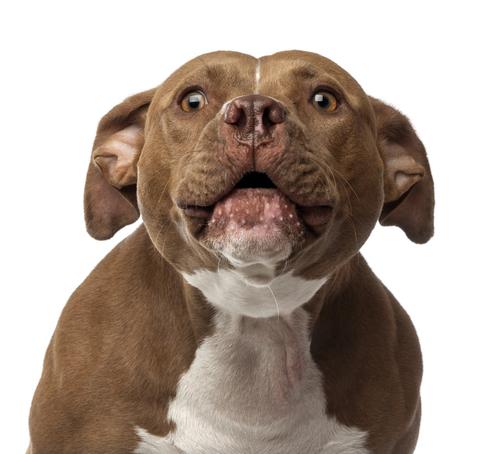 reactieve angstige hond