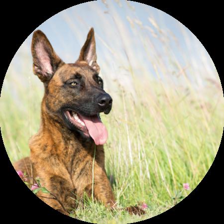 hondencursus stapje vooruit