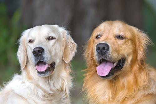 honden community