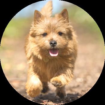 trainen met je je hond in de community