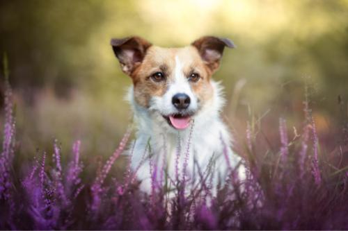 online trainen met je hond