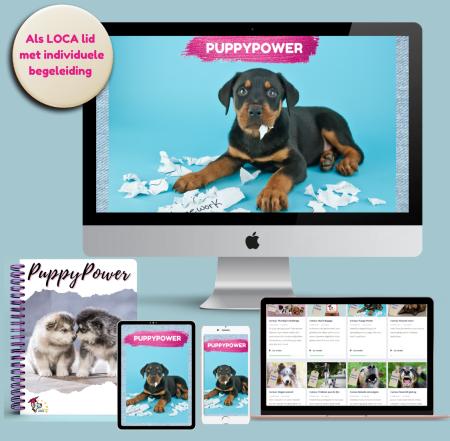 cursus online puppy