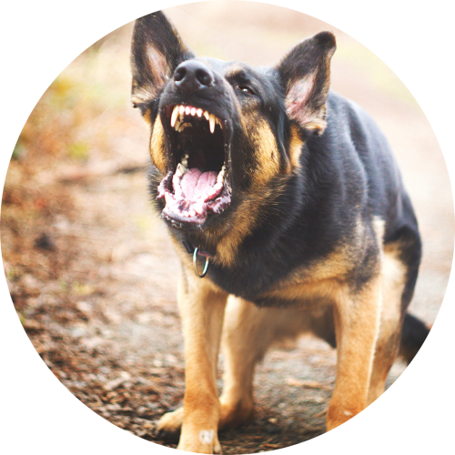 uitvallende hond trainen