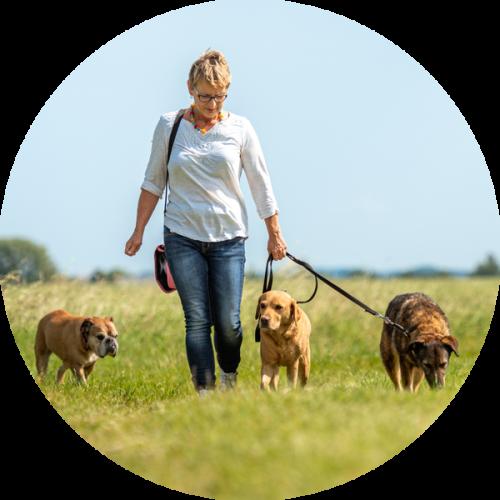 Online hondentraining trekken aan de lijn