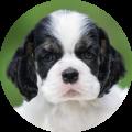 menu testemonial puppy