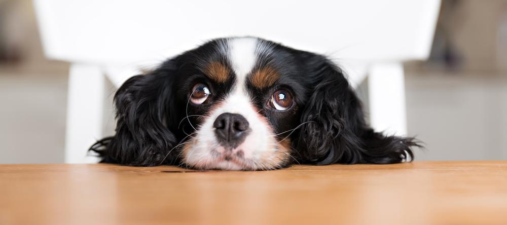 waarom-is-hond-bang