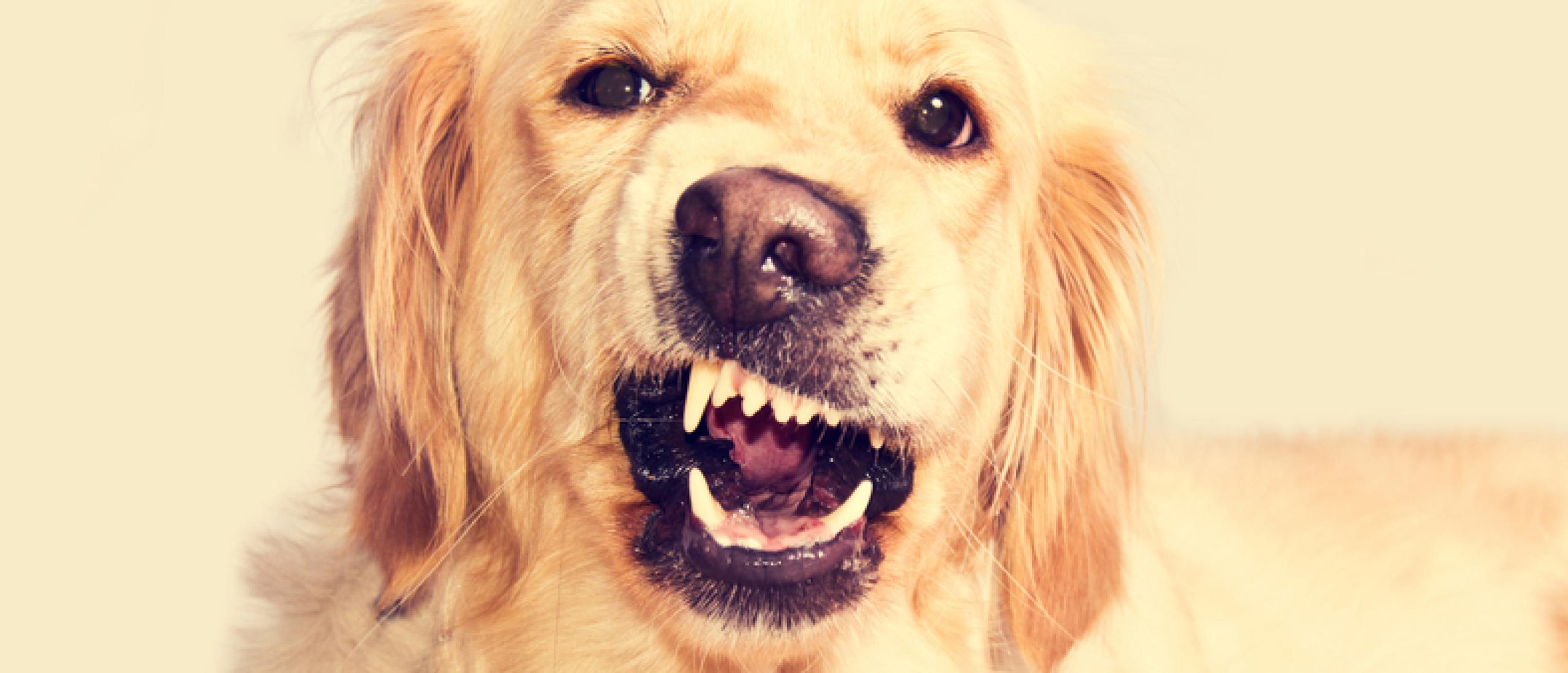 Het gebit van je hond gezond houden