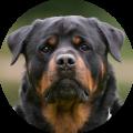 bezoek-ontvangen-hond