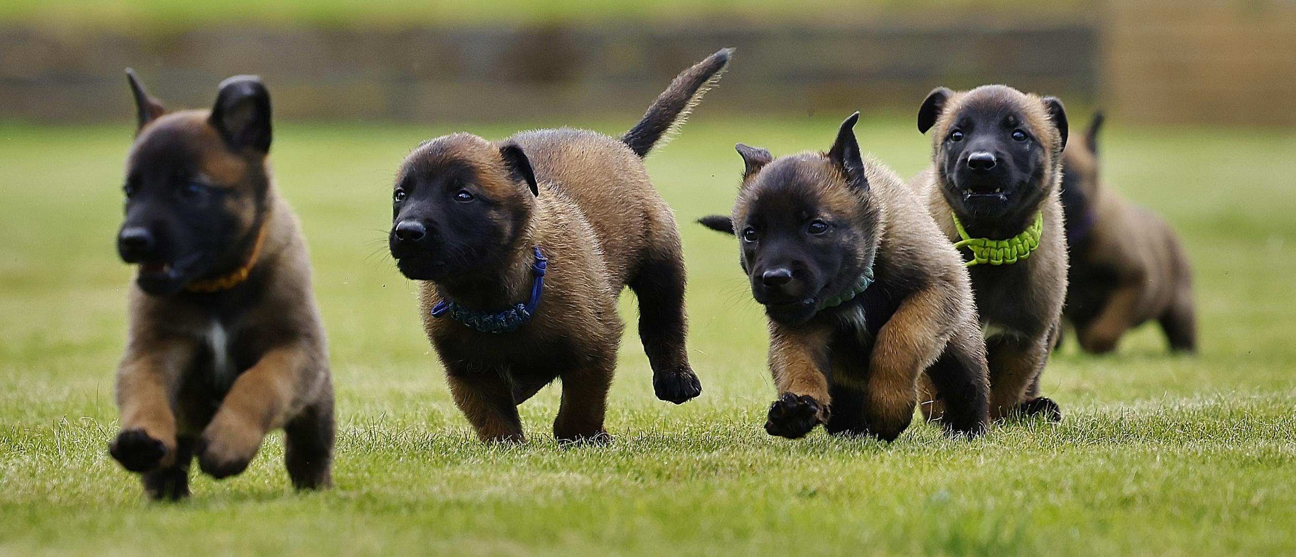 Ik wil een nest puppy's